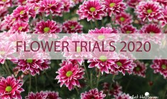 Flower trials 2020