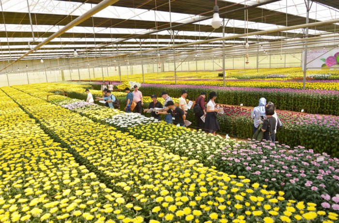 Press Release Flower Trials 2018