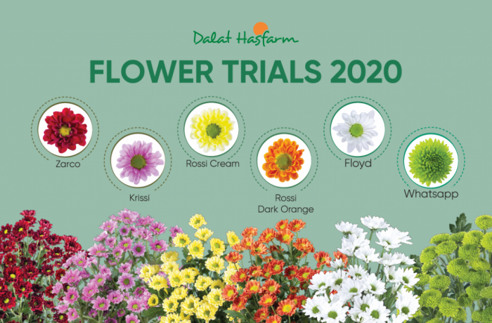 Dalat Hasfarm Flower Trials 2020